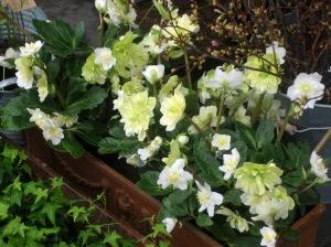 blommor-img_95451